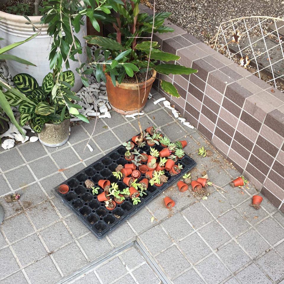 植物に襲われる夢見たんだろうな、きっと 笑笑